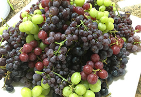 Melissa's Produce Grapes